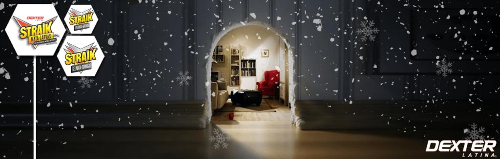 Blog - Inverno Insetos