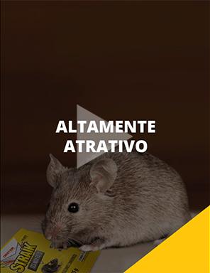 Straik Mata-Ratos
